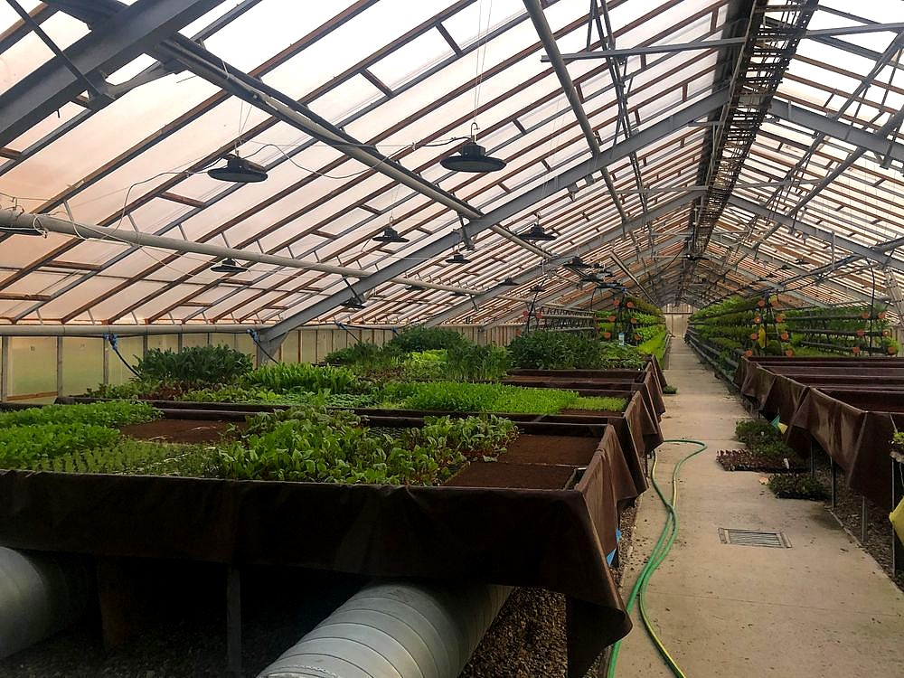 Business for sale:Growing salads and vegetables using hydroponics